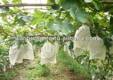 fruit Grape growing bag