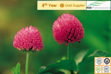 Hot Sale Red Clover Extract/ Trifolium pratensel L