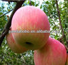 China red fresh fuji apple fruit in high quality with low price as a supplier in china