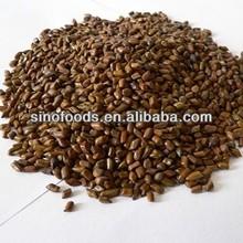 jue ming zi herb medicine black seed oil habbatus sauda