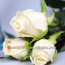 supply high quality fresh cut flowers of wedding flower