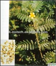 High Quality Best Supplier Tribulus Terrestris P.E Tribulus Extract 20% 40% 60% 90% Total Saponins