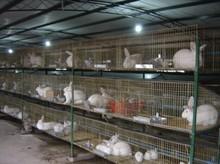 Beautiful Rabbit Cage Materials