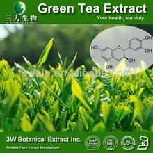 Green Tea Extract Tea Polyphenols EGCG Powder 98% EGCG 50%