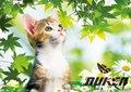belle image 3d animal de dessin animé image