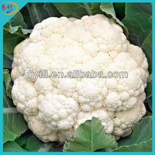 Supply white frozen cauliflower floret