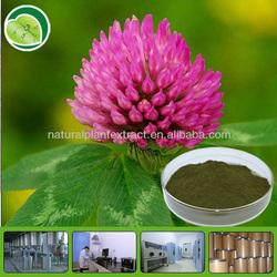 women health supplement Red Clover Extract /Trifolium pretense extract powder/Red Clove PE /isoflavone 2.5%, 8%, 20%,40% UV