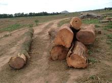 Quina, Ipe, Guayacan logs