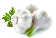 natural garlic fresh garlic 2013