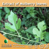 100% Natural Extract of Mulberry leaves (100% Natural and healthy for your life) from 3W supplier