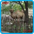 Parc à thème de décoration haut de simulation life size statue chameau,