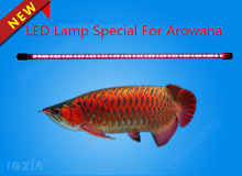 Roxin Aquarium Arowana fish Lamp Amphibious fish red water not