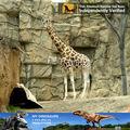 Mi dino- parque de atracciones decoración animatronic modelo jirafa