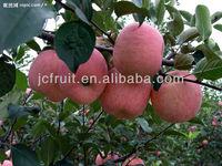 2014 bulk fresh fuji apple fruit for export
