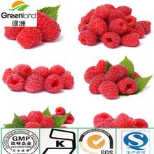100% nuture Raspberry Extract,fruit powder