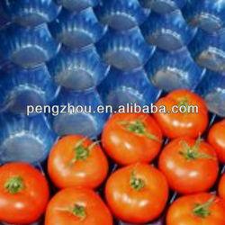 Polypropylene PP Blue Fruit Tray For Pear/Fresh Fruit Export Packaging