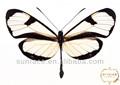 vuelo de la mariposa de papel decoración de la pared de metal de artesanía