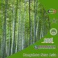Foglia estratto di bambù(senza di vendita al dettaglio per gli individui per uso personale)