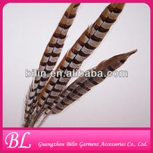 Natural Pheasant Tail Pheasant Feather