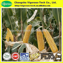 100% natural Cornsilk Extract/Cornsilk Extract powder/zea mays extract