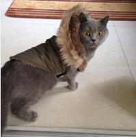 Hooded Pet apparel