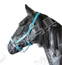 Decorative deluxe Halter bridle horse JC5D2721