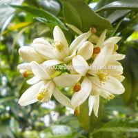 Amazing/ Magical Benefits for Fresh & Natural Neroli Oil
