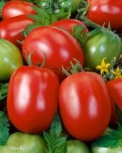 Red Jumbo F1 Hybrid Tomato Seeds