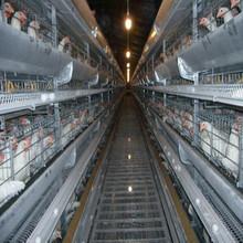 hot dip galvanized 120 birds/cage chicken cage poultry farm