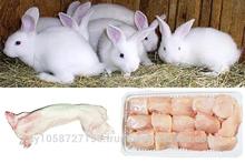 calidad de conejo congelado para la venta