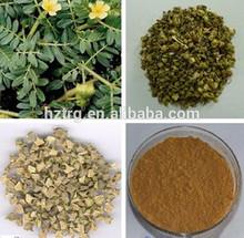 Natural Tribuloside40%60%80%90%,tribulus terrestris extract(total saponins 80%)