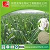 Manufacturer Supply Pure Natural Garlic Extract Allicin Powder