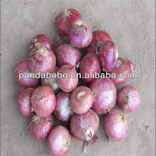 2014 fresh golden red yellow onion for sale in china in high quality from factory as a wholesale supplier and exporter