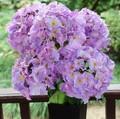 baratos artificial hortênsia flor no preço de fábrica para decoração de casamento e decoração de interiores