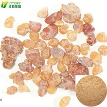 natural extract mastic gum powder