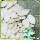 2013 New Crop Bake Dried Snow White Chinese Pumpkin Seeds Crop Tops Wholesales Pumpkin Kernels