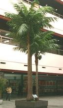 SJ- Hot sale artificial outdoor coconut tree/fake coconut trees for outdoor & indoor decoration