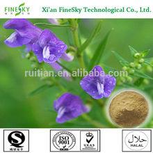 High quality radix scutellariae baicalensis extract