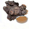 Natural Chaga mushroom extracts powder, bulk supply