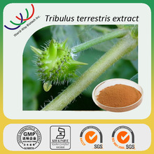 free sample tribulus terrestris extract,20% 40% 70% 80% 90% total saponins
