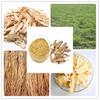 radix angelicae pubescentis extract powder/natural angelica root extract/nature angelica extract
