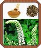 black cohosh extract 2.5%,organic black cohosh extract