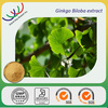 free sample GMP manufacturer 100% natural flavone glycosides/terpene lactones ginkgo biloba extract 24/6