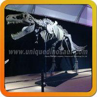 Museum simulation dinosaur fossil excavation dinosaur