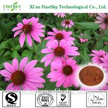 new season echinacea herb extract Polyphenol 4% by UV