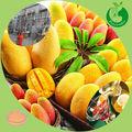 la fábrica del gmp suministro frutasorgánicas polvo de harina de banano