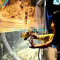 Haijing acrylique Aquarium Mini Sharks pour les réservoirs de poissons