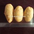 2014 frische hochwertige kartoffel heißer verkauf( 75- 100gramm)( 100- 150gram)( 150- 250 Gramm)