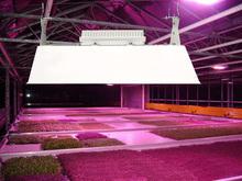 Bloom Growth Induction Grow Light and Ballast 500watt