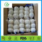 2014 the most popular fresh garlic with good taste in China enjoying great reputation